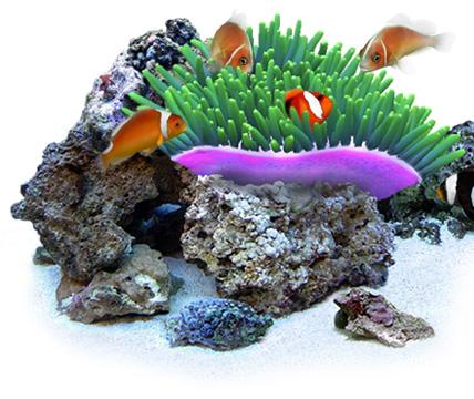 DigiFish Clownfish:(株)ピーアンドエーインターナショナル